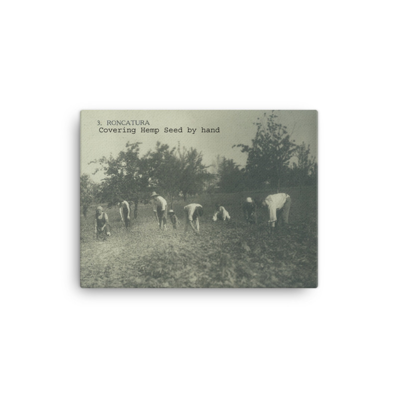 "Italian Hemp Farming ""Roncatura"" #3 Series 1-10 / 12x16 (copy)"
