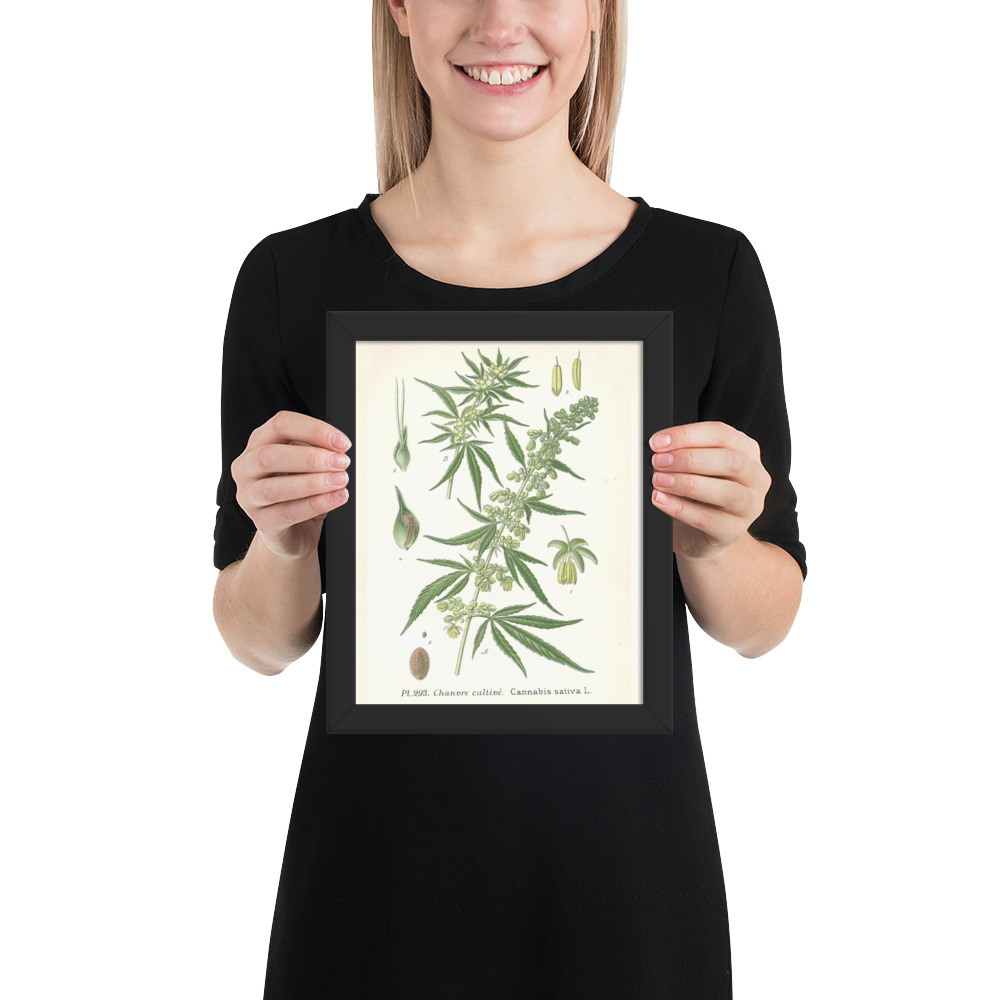 Cannabis French Chanvre plant seed 1890's Canvas