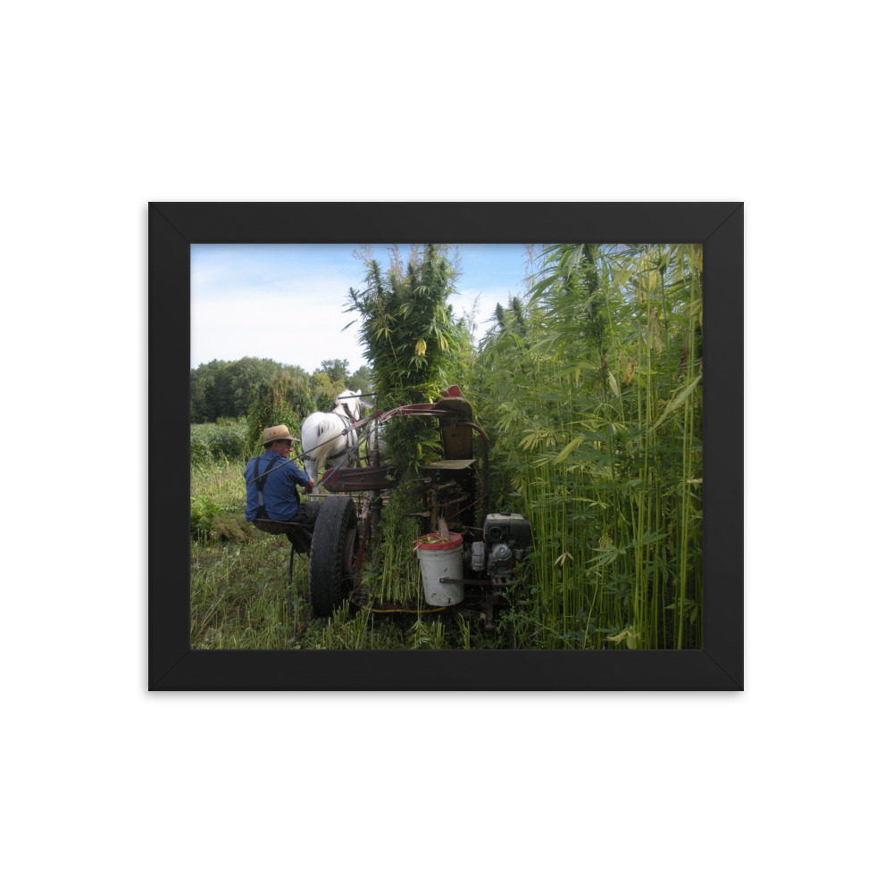 "Canadian Hemp Harvest ""Chanvre"" Framed Print"