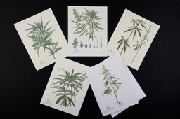 Cannabis Botanical Note Cards Pack of 5 with envelopes